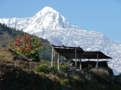 Hiunchuli i Annapurnamassivet/Dag Norling